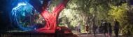 cropped-colouredtrees-3-47-1l.jpg