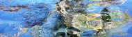 cropped-dragonfly-3-47-1l1.jpg